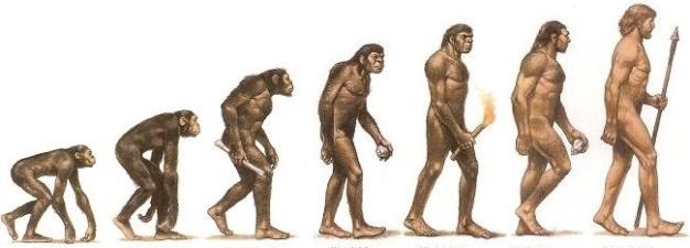 Evolución a muy grandes rasgos