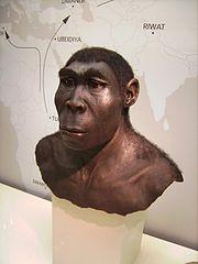 180px-Homo_erectus