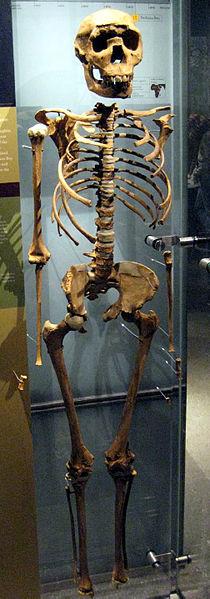 Esqueleto del niño de Noriokotome, mejor ejemplar hallado de Homo Ergaster