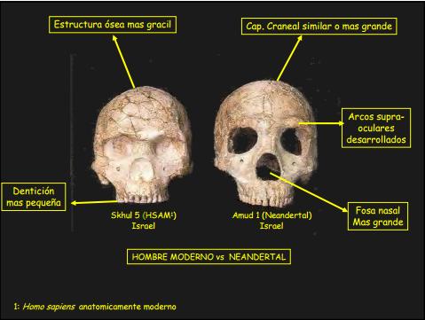 Cráneo hallado en Amud
