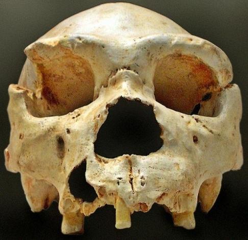 Cráneo de Homo Heidelbergensis