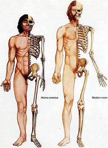 erectussapiensbones