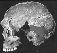 Cráneo de Qafzeh
