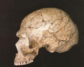 Cráneo de Skhul V