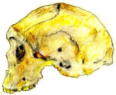 Cráneo del hombre de Kabwe