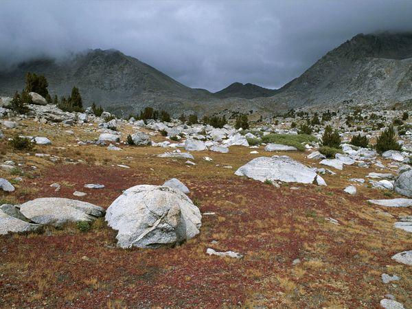 Paisaje de tundra