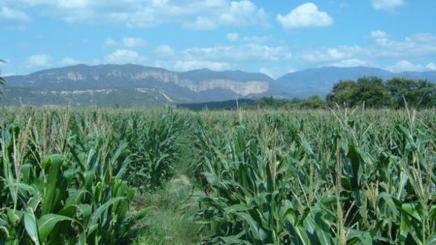 Valle de Tehuacan
