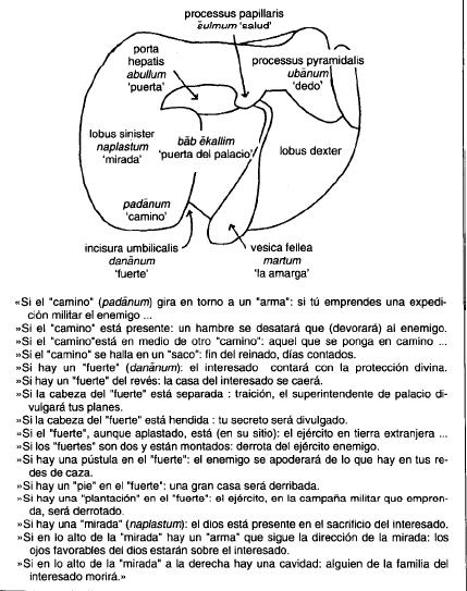 Guía completa para interpretar los presagios del hígado de un animal sacrificado
